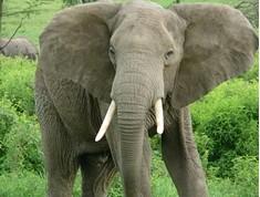 2013-07-04 11-53-35_28 Los colmillos de elefantes    13.doc (Sólo lectura) [Modo de compatibilidad]
