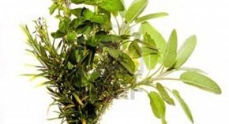Manojo-de-hierbas-mediterraneas-salvia-el-oregano-el-tomillo