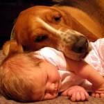 Amor de los niños a los animales