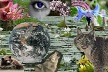 extinción_de_especies
