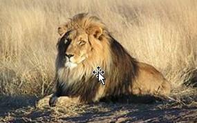 Se quedara la selva sin su rey?