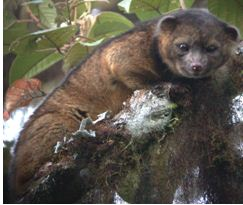 2014-08-06 16-58-01_14.Las especies animales y protistas más llamativas del año 2013 jun 14