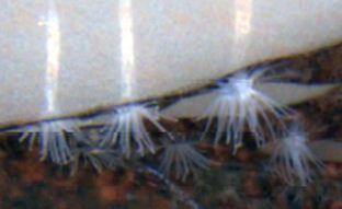 2014-08-06 16-58-13_14.Las especies animales y protistas más llamativas del año 2013 jun 14
