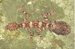 2014-08-06 16-58-36_14.Las especies animales y protistas más llamativas del año 2013 jun 14