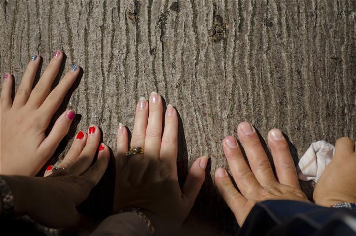 Las manos de los habaneros en la ceiba pidiendo sus deseos