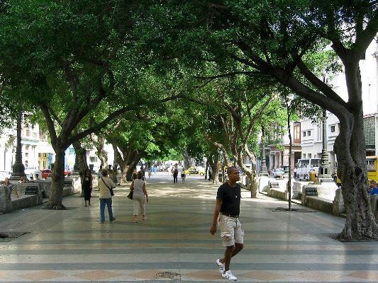 2. Paseo arbolado El Prado