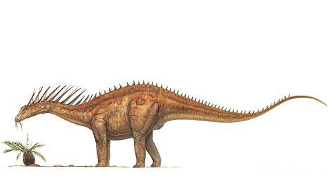 MM-amargasaurus-illustration