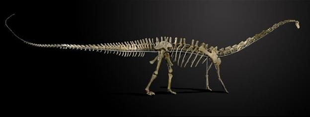 Fósil de Diplodocus de 20 metros de largo