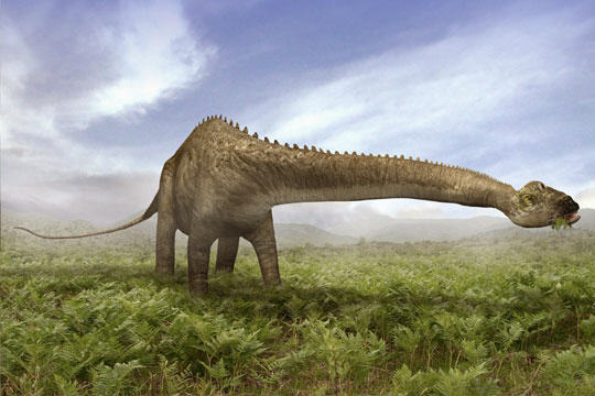 diplodocus9