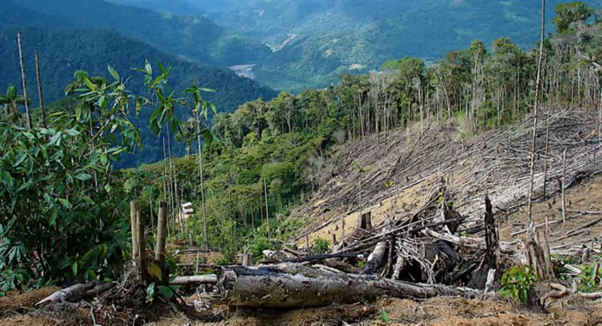 Deforestacion-del-Amazonia (Small)