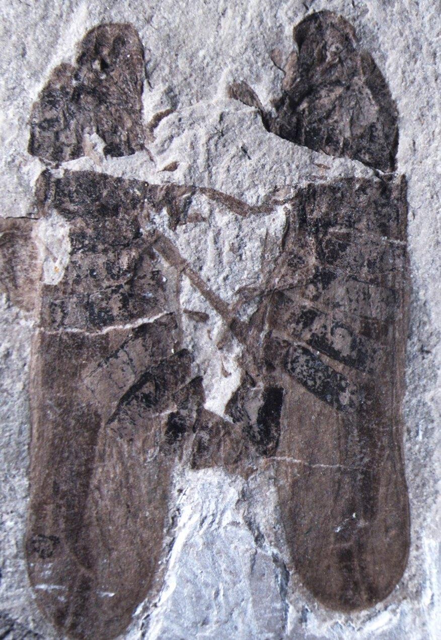 Insectos cercopoideos fósiles en cópula