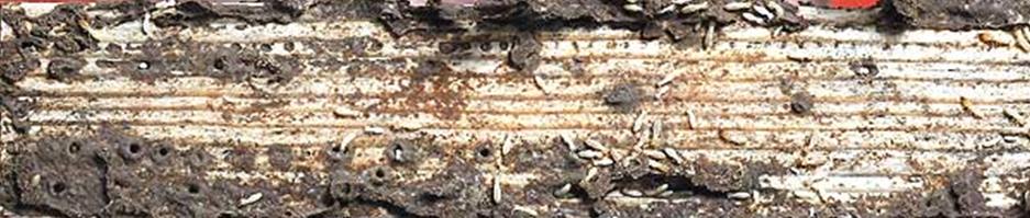 Tema 45. 1 Termitas en madera