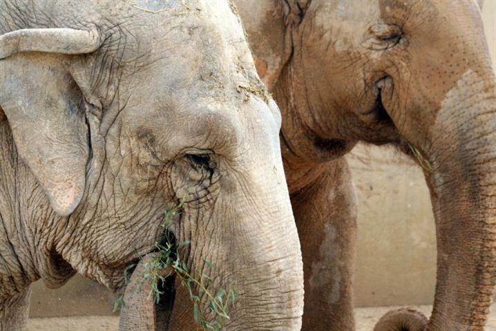 defaunacion-elefantes.001 (Small)