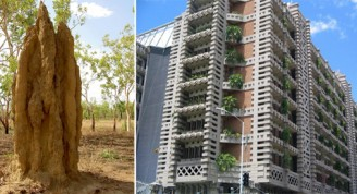 Termitero y edificio de oficinas Eastgate Centre de Harare en Zimbabwe. Fotos: D. Kelpe y M. Patterson