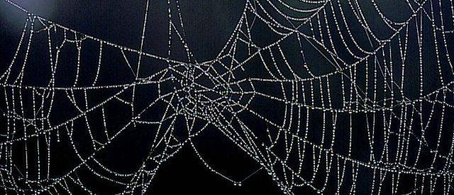 Tema 91. Tela de araña.