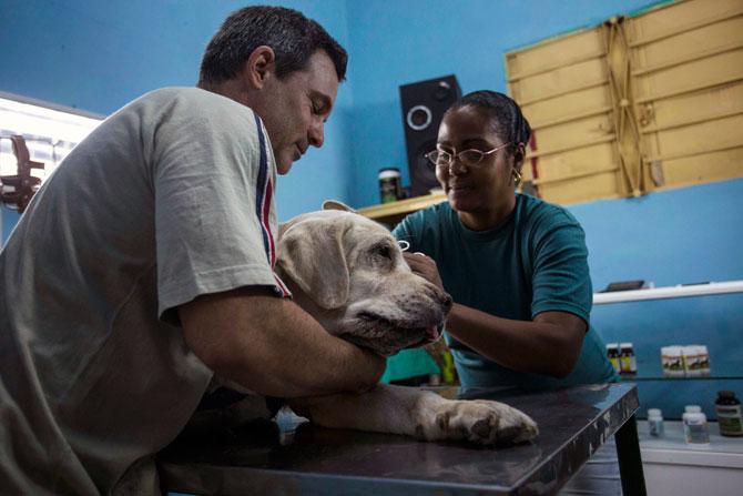 veterinario-cuba-mascotas