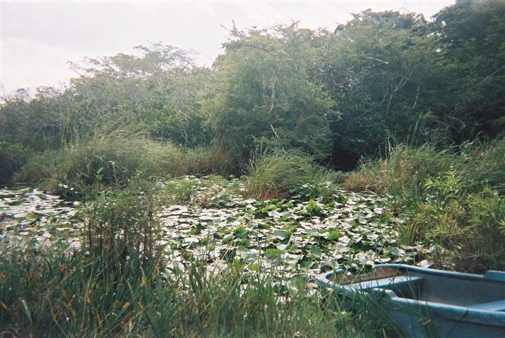 1200px-Isla_de_la_Juventud_-_Crocodile_area (Small)