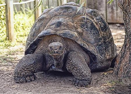 Islas-tortugas-galapagos2