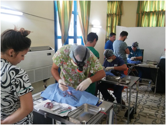 Cirujanos veterinarios y estudiantes de la Universidad Agraria de La Habana durante esterilizaciones selectivas de animales abandonados en la Quinta de los Molinos, febrero 2017