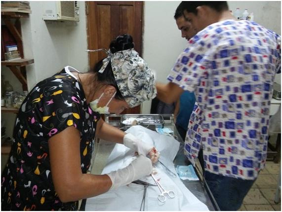 """Realizando la esterilización en una perrita abandonada. Clínica Veterinaria """"Laika"""", Habana Vieja, junio 2017 (Foto: Fernando Gispert)"""