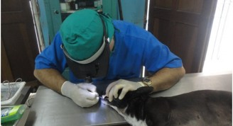 "Médico veterinario realizando limpieza bucal a una perra mestiza, clínica veterinaria ""Laika"", Habana Vieja (Foto: Fernando Gispert Muñoz)"