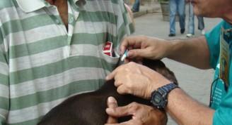 """Los productos veterinarios usados a menudo son de última generación y alta calidad, donados por la Agencia Bayer de Cuba u otra ONG como Spanky Project. Los mismos son aplicados por técnica de pipetas mini dosis """"spot on"""", en gotas sobre la grupa del animal, teniendo un efecto inmediato, con gran recidiva y poca toxicidad. Sus principios activos más comunes son el imidacloprid, la ivermectina y la selamectina, productos conocidos por su alta eficacia contra endo y ectoparásitos."""