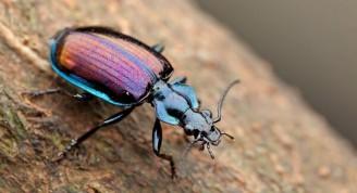 Que-Comen-Los-Escarabajos-2