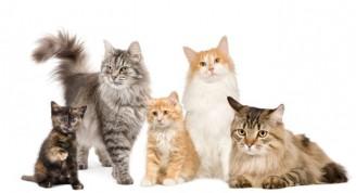 razas-gatos-xl-668x400x80xX