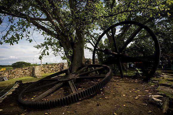 La rueda dentada encarcelada en un jagüey forma parte de las ruinas del Ingenio La Demajagua. Foto: Irene Pérez/ Cubadebate.