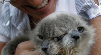 Gato con dos cabezas