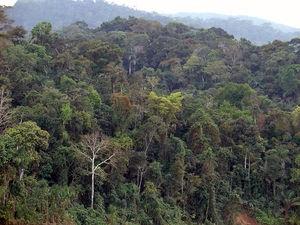 Tema 195. Amazonía