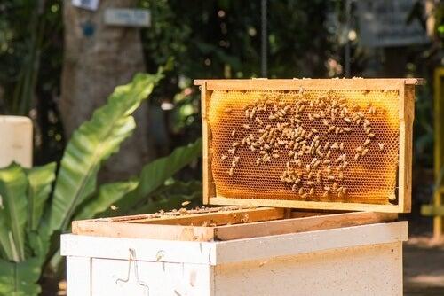 panal-abejas