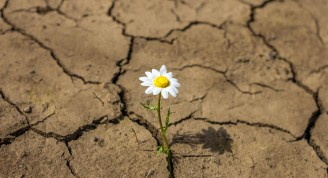 resiliencia (Medium)
