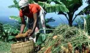 Foto tomada del artículo de la FAO