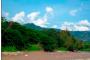 Selva baja caducifolia
