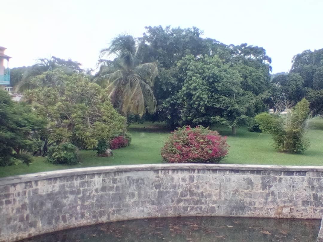 Ficus replantados por Eusebio Leal en el Castillo de La Real Fuerza