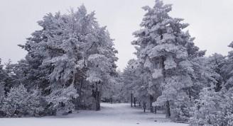 Nieve00